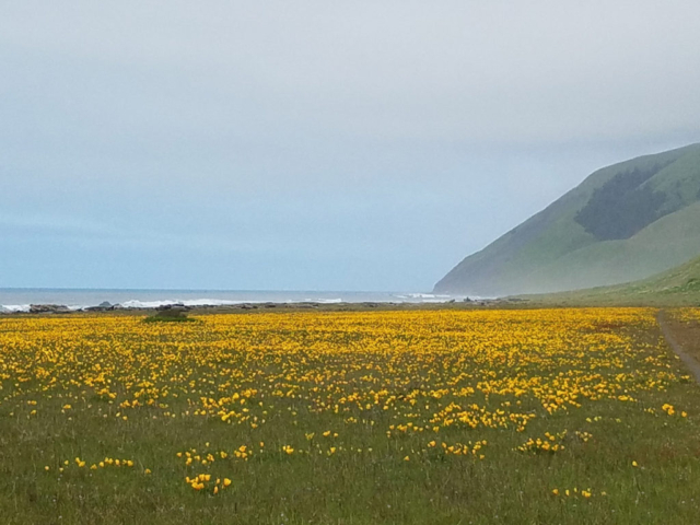 Beautiful flower in the foot of the mountain of Lost Coast Adventure Tours