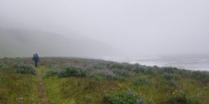 Lost Coast Trail Gitchell Creek hike